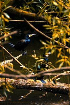Cormorant, Bird, Water, Animal, Plant, Blue