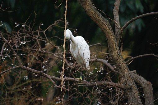 Bird, Natural, Animal, Ecology, Wildlife, Serenity
