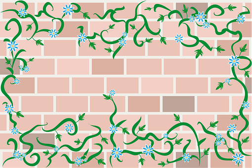 Wall, Barda, Vine, Climber, Plant