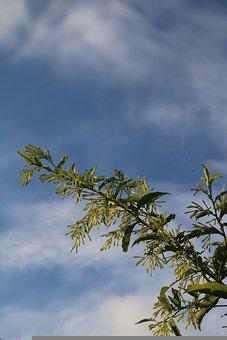 Sky, Clouds, Trees, Branches, Landscape