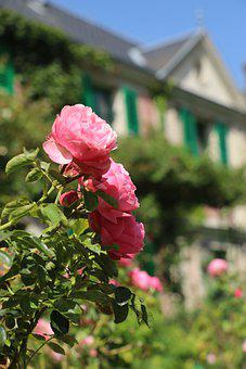 Giverny, Monet, Nature, Roses, Plant, Garden, Flower