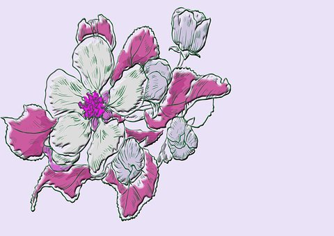 Bouquet, Flowers, Plant, Purple, Schnittblume, Tulips
