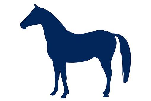 Horse, Animal, Silhouette, Nature, Wild, Wildness