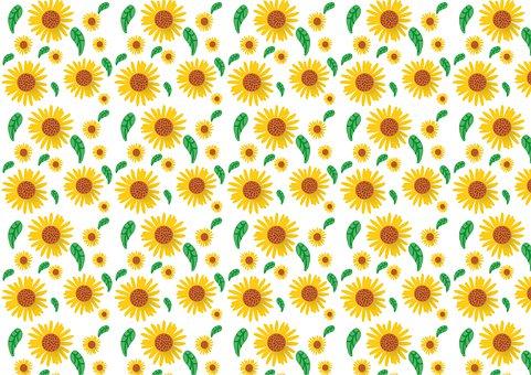 Sunflower, Pattern, Flower, Summer, Background, Nature