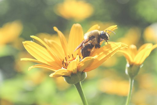 Bee, Flower, Insect, Macro, Nature, Honey, Yellow, Fly