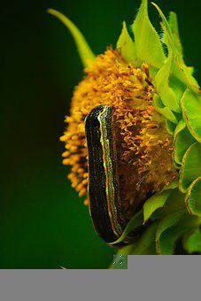 Worm, Insect, Flower, Caterpillar, Moth, Insects