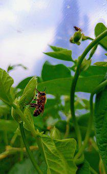 Bee, Insect, Garden, Greenhouse, Beans