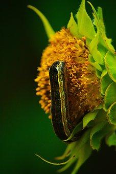 Worm, Insect, Flower, Caterpillar, Moth