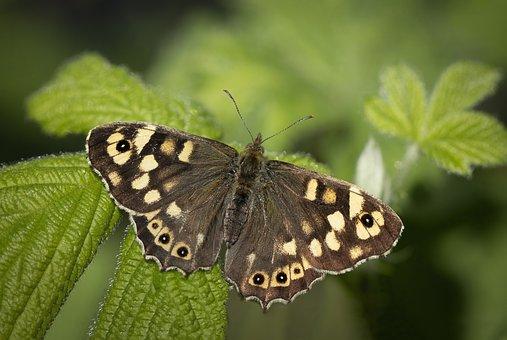 Butterfly, Pattern, Wings, Sitting
