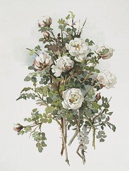 Flower, White, Spring, Bloom, Plant