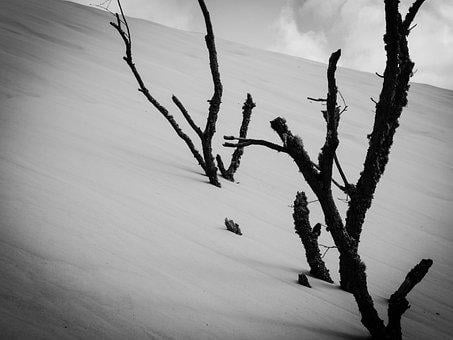 Dune, Branches, Sand, Nature, Landscape