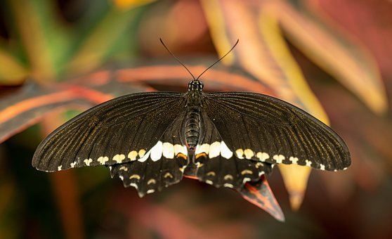 Butterfly, Insect, Nature, Wings, Black, Animal, Green