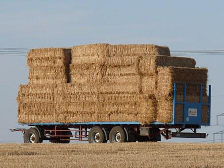 Hay Wagon, Agriculture, Harvest, Straw Bales