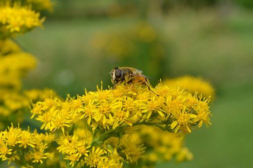 Nature, Plant, Branch, Yellow, Bug At, Pollen, Green