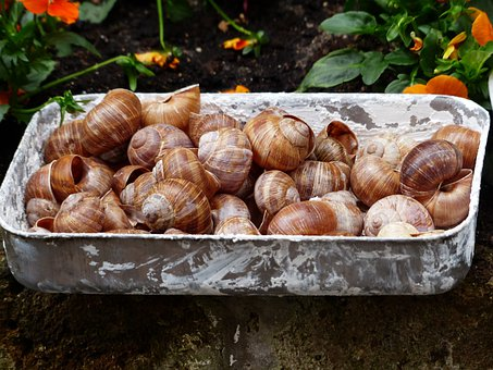 Escargots, Snails, Collection, Shells, Helix Pomatia