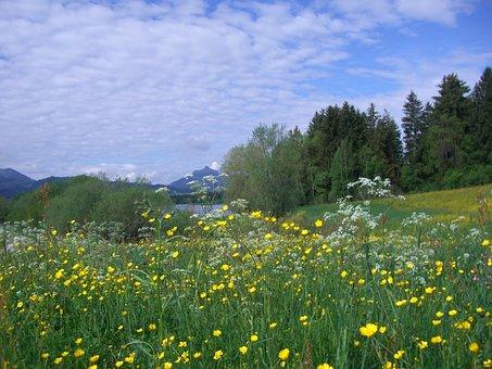 Flower Meadow, Gruentensee, Greened, Flowers, Yellow