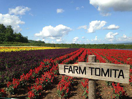 Furano, Biei, Hokkaido, Farm, Tommy Ta, Japan