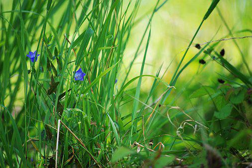 Nature, Grass, Green, Blade Of Grass, Incomplete
