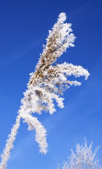 Leann, Blade Of Grass, Winter, Frost, Cold, Rime, White
