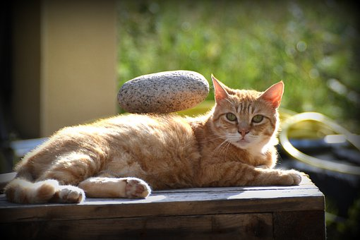 Cat, Animal, Menhir
