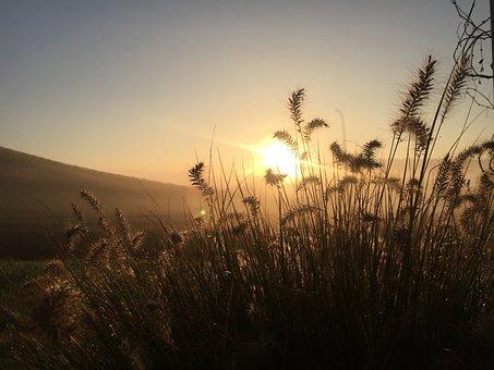 Grass, Nature, Meadow, Plant, Green, Blade Of Grass