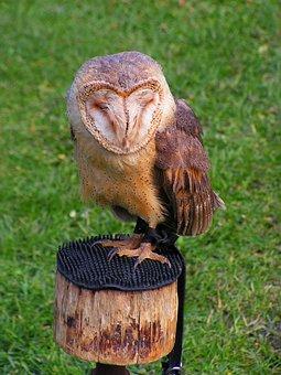Barn Owl, Predator, These Albums