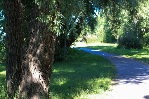 Away, Trail, Trees, In The Green, Ribnitz Ut