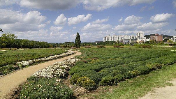 In A Field For, Ulsan, Yang Won-jin