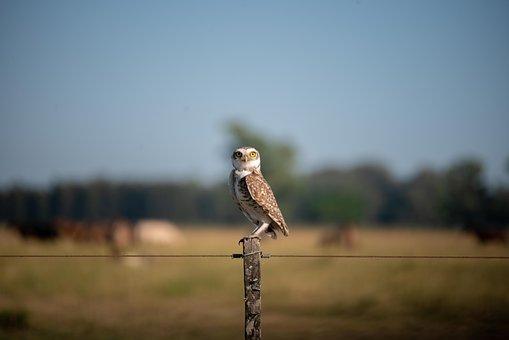 Owl, Farm, Environment, Grass, Wildlife, Animal, Nature