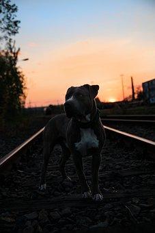 Dog, Animal, Pet, Portrait, Charming, Animal Portrait