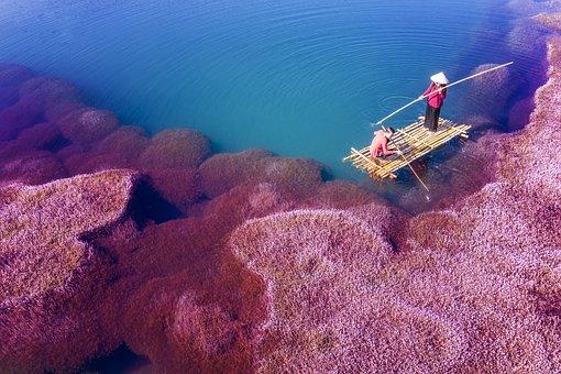 Pink Algae, Pink, Algae, Fisherman