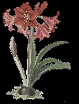 Flower, Pink, Nature, Blossom, Bloom
