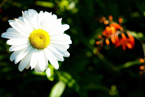 Flower, Flowers, Garden, Nature, Summer, Beauty, Plants