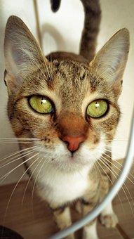 Cat, Brown Cat, Striped Cat, Green Eyes, Green-eyed Cat