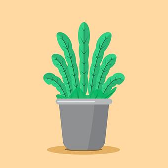 Orchid, Plant, Pot, Green, Leaf