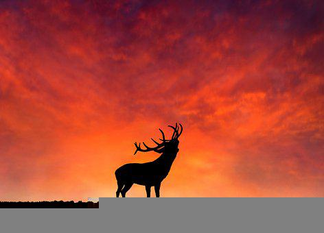 Red Deer, Stag, Red, Red Sky, Dusk