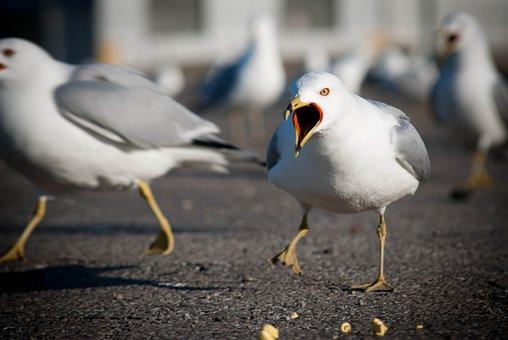 Seagulls, Birds, Wildlife, Wings, Sea
