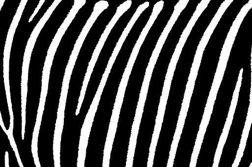 Zebra, Stripes, White, Pattern, Black, Print