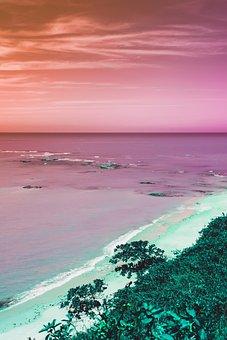 Beach, Palm, Ocean, Holiday, Water, Nature, Summer
