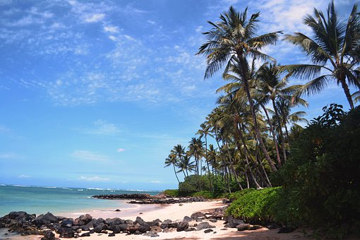 Beach, Palm, Sea, Tropical, Tree, Sand