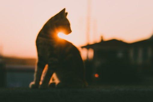 Cat, Sun, Pet, Animal, Silhouette, Blurred, Focus