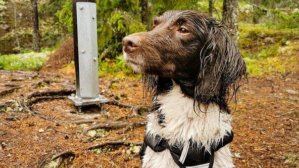 Dog, Wet, Animal, Nature, Doggy Style