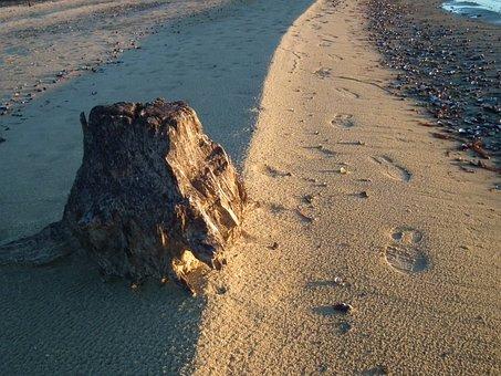 Sand, Beach, Rocks, Tree, Stump, Lake