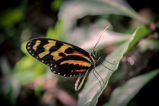 Butterfly, Nature, Leaves, Insects