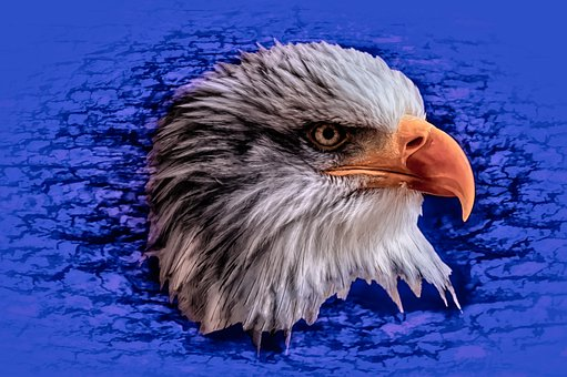 Eagle, Portrait, Bird, Usa, America, Symbol, Nature