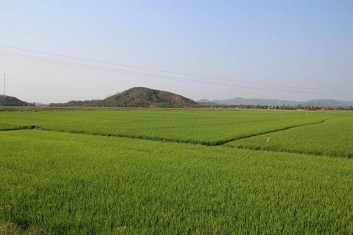 Vietnam, Asia, Field, Rice, Farmer, Agriculture, Farm