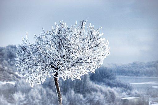 Winter, Frost, Leann, Snow, Bush, Beach