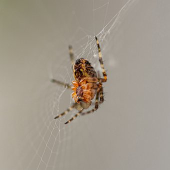 Spider, Animals, Cobwebs, Macro, The Insect, Close