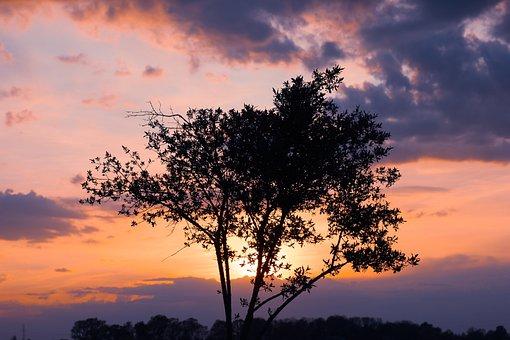 Tree, Sunset, Nature, Forest, Landscape, Sky, Trees