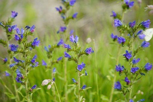 Beauty Of Nature, Green, Nature, Echium
